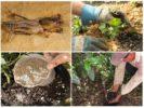 Применение отравы