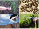 Применение уксуса против муравьев