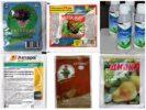 Эффективные препараты от тли