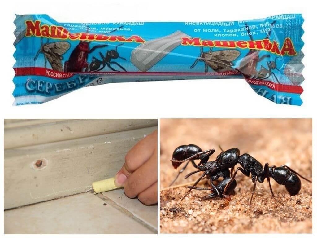 Карандаш Машенька от муравьев
