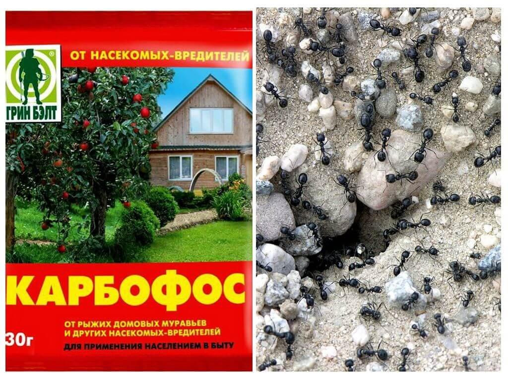 Карбофос от муравьев в саду