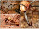 Кочевники – муравьи
