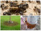 Ловушки для муравьев на деревьях