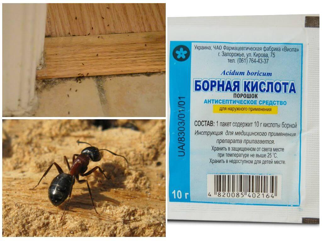 Как вывести муравьев из деревянного дома