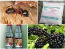 Народные средства от муравьев на грядках