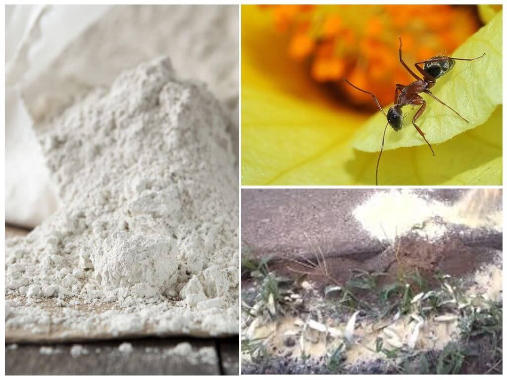 Супер фас от тараканов: отзывы и инструкция по применению.