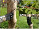 Обработка стволов от насекомых