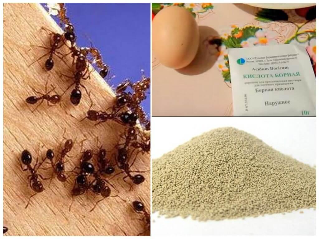 Народные средства против муравьев