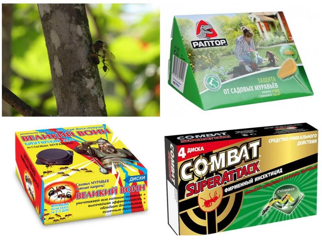 садовые муравьи как избавиться народными средствами в огороде
