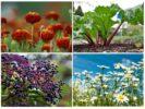 Растения от тли
