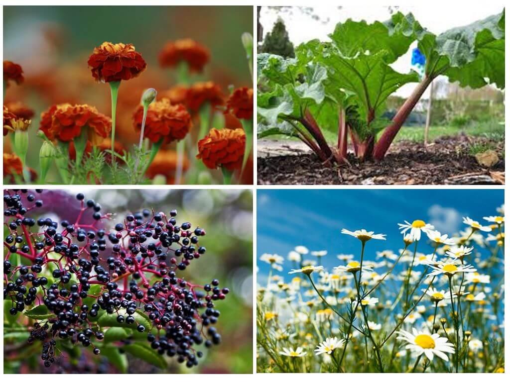 Защита огорода от вредителей народными средствами