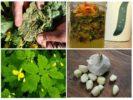 Растительные средства от тли