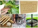 Народные рецепты от насекомых