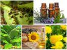 Средства борьбы с насекомыми вредителями