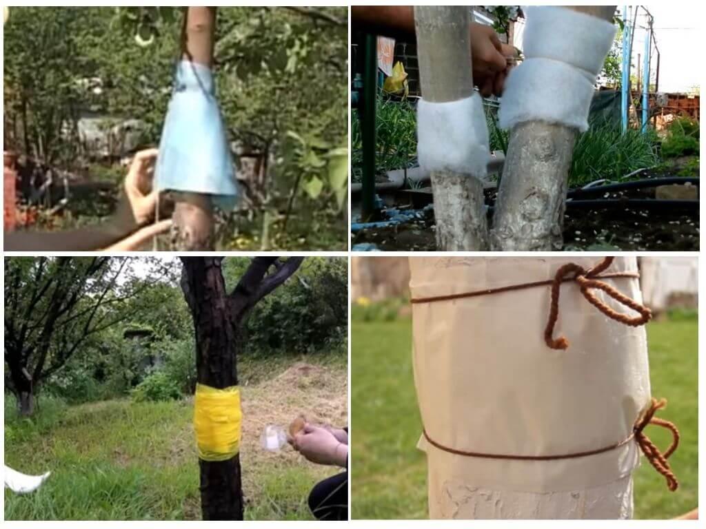 Ловчие пояса для плодовых деревьев сделать своими руками фото 28