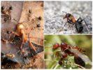 Жизнь лесного муравья