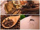 Масло гвоздики от летающих насекомых