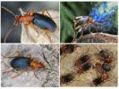Образ жизни жука