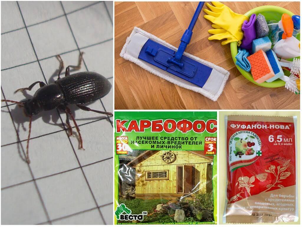 Уничтожение жуков в доме