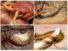 Питание и размножение вредителя