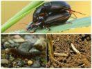 Размножение насекомого