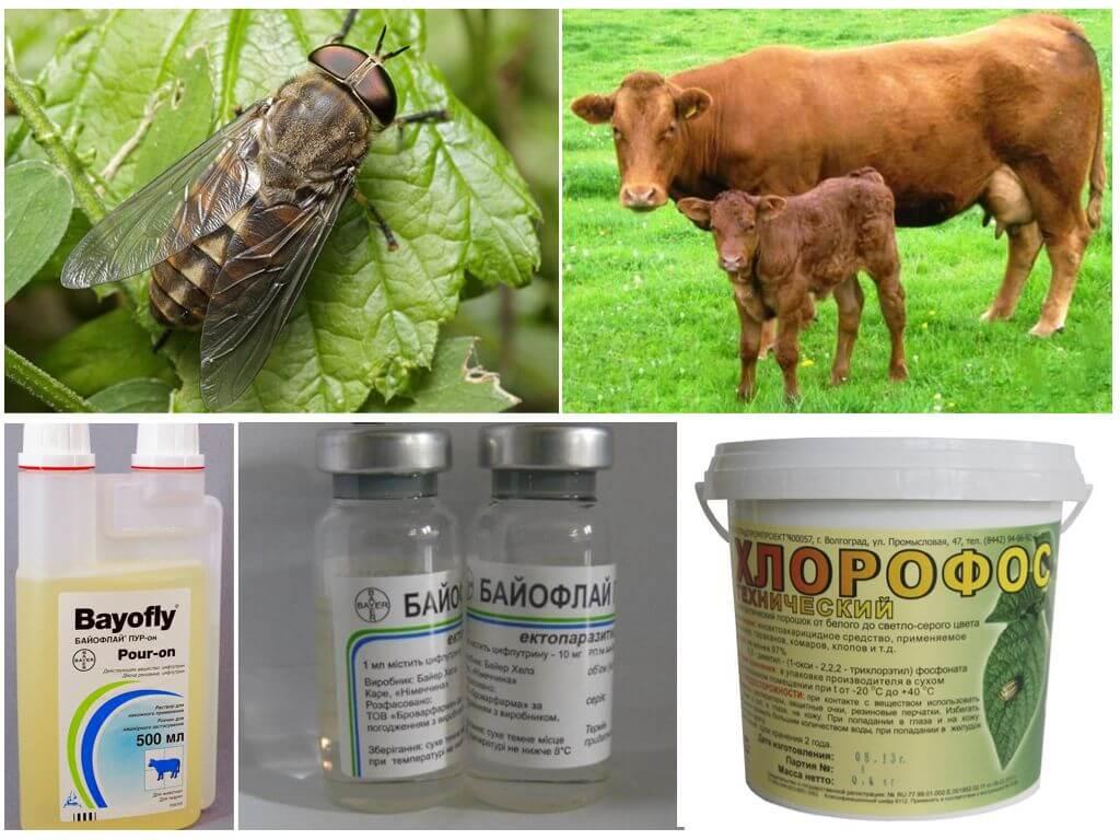Защита животных от укусов кровососущих насекомых