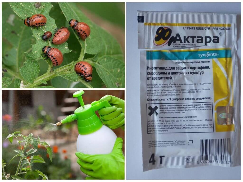 Средство Актара от колорадского жука