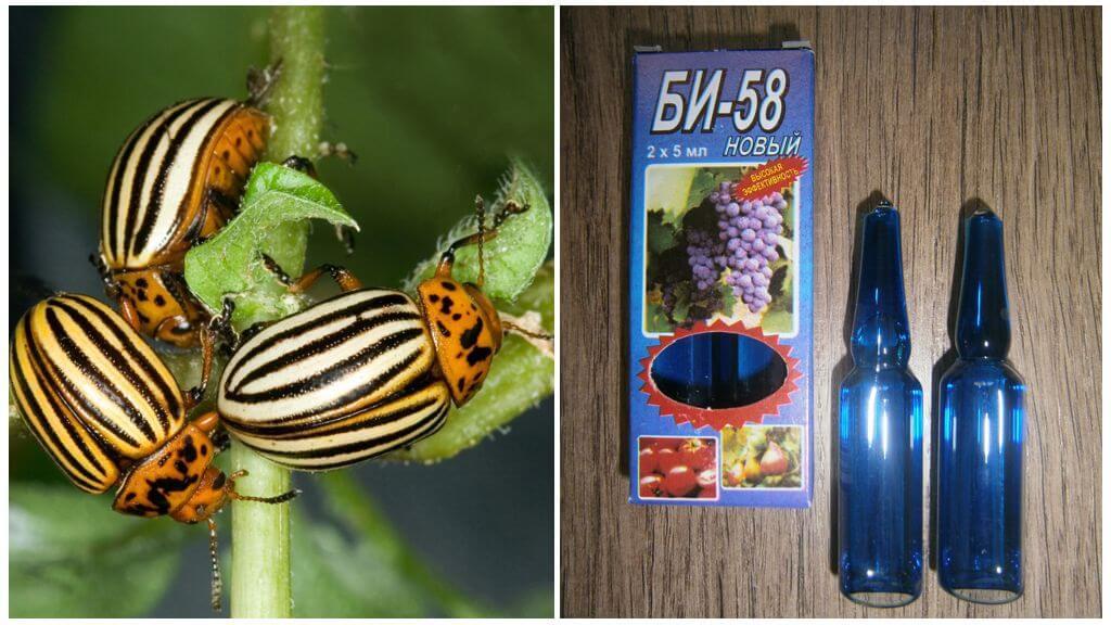 Средство Би 58 от колорадского жука
