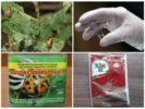 Биологические препараты для обработки картофеля