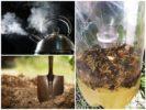 Способы борьбы с земляными пчелами
