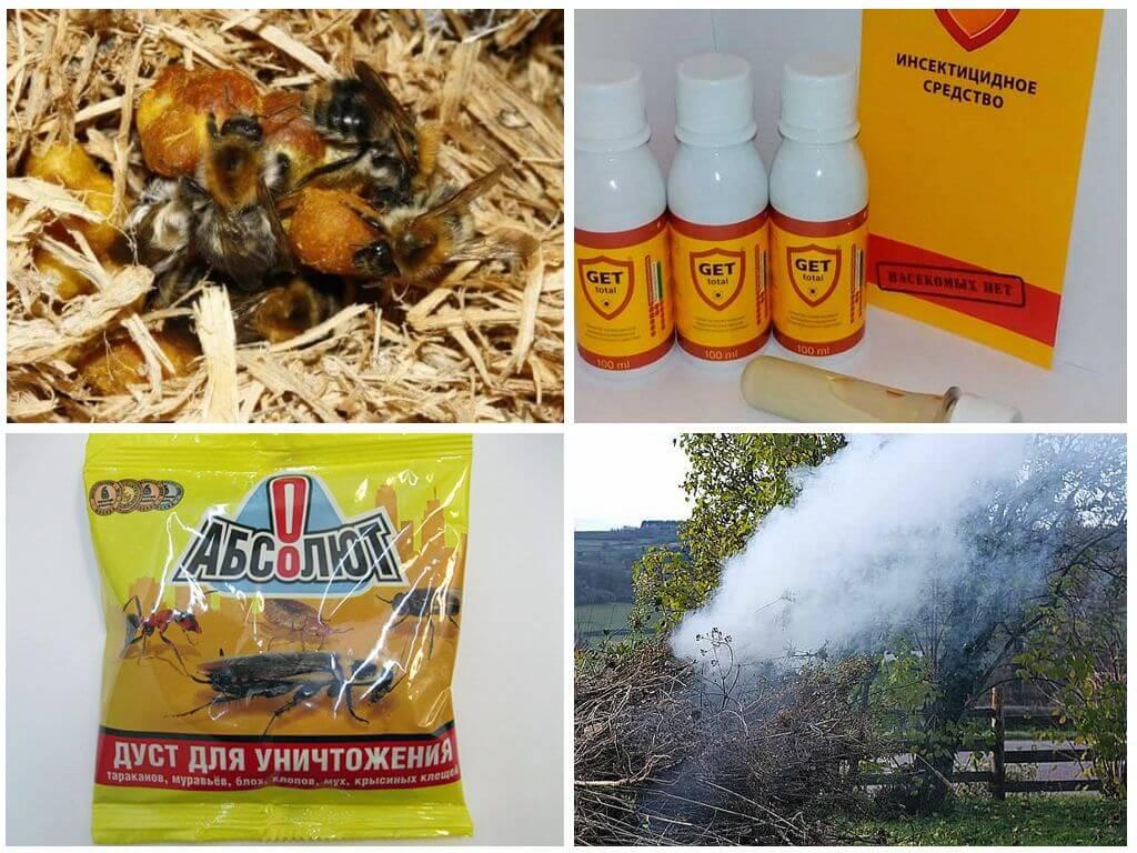 Способы борьбы с насекомыми на огороде