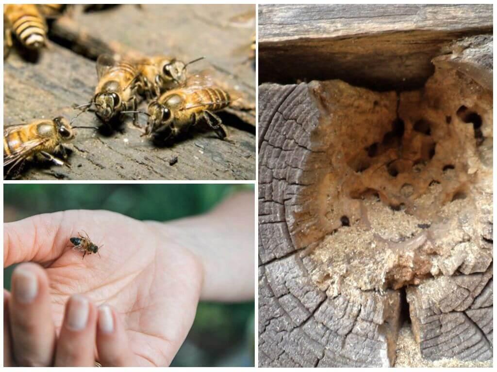 Пчелы в деревянном доме