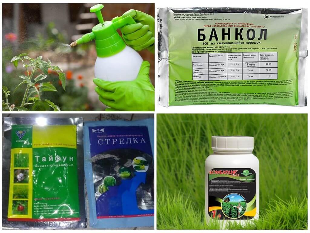 Химические средства для уничтожения жуков