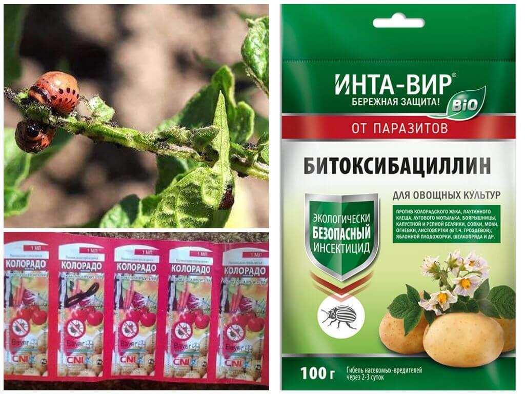 Химические препараты для уничтожение колорадского жука