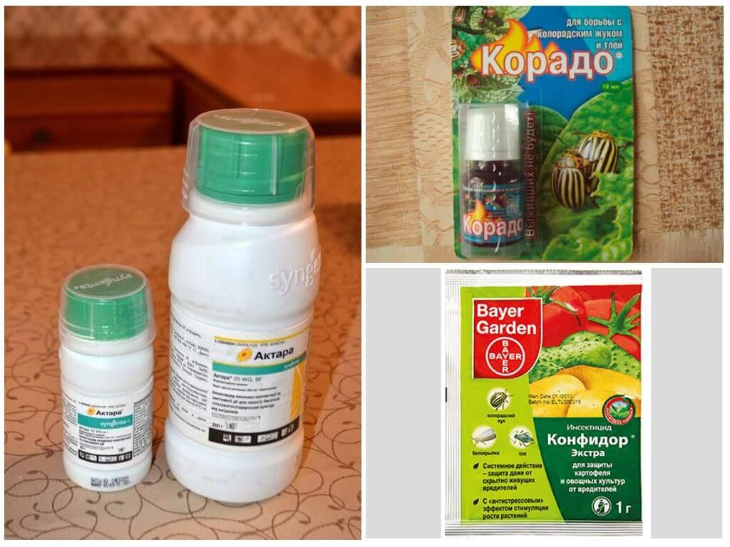 Инсектицидные средства для борьбы с колорадским жуком