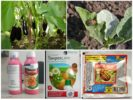 Химические средства от колорадского жука