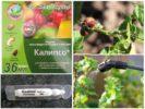 Средство Калипсо против колорадского жука