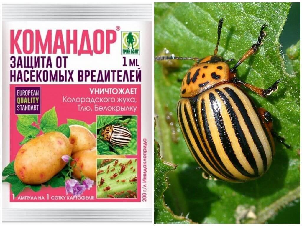 Средство Командор от колорадского жука