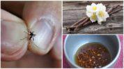 Народные средства для борьбы с насекомыми