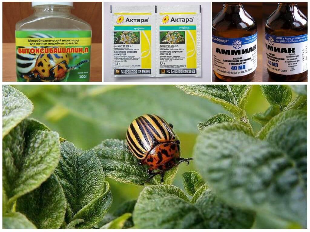 Методы борьбы с жуками листоедами