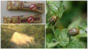 Применение препарата Наповал против колорадского жука