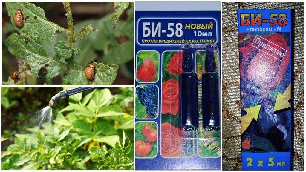 Средство Би 58 против колорадского жука