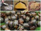 Средства для опудривания баклажанов от колорадского жука