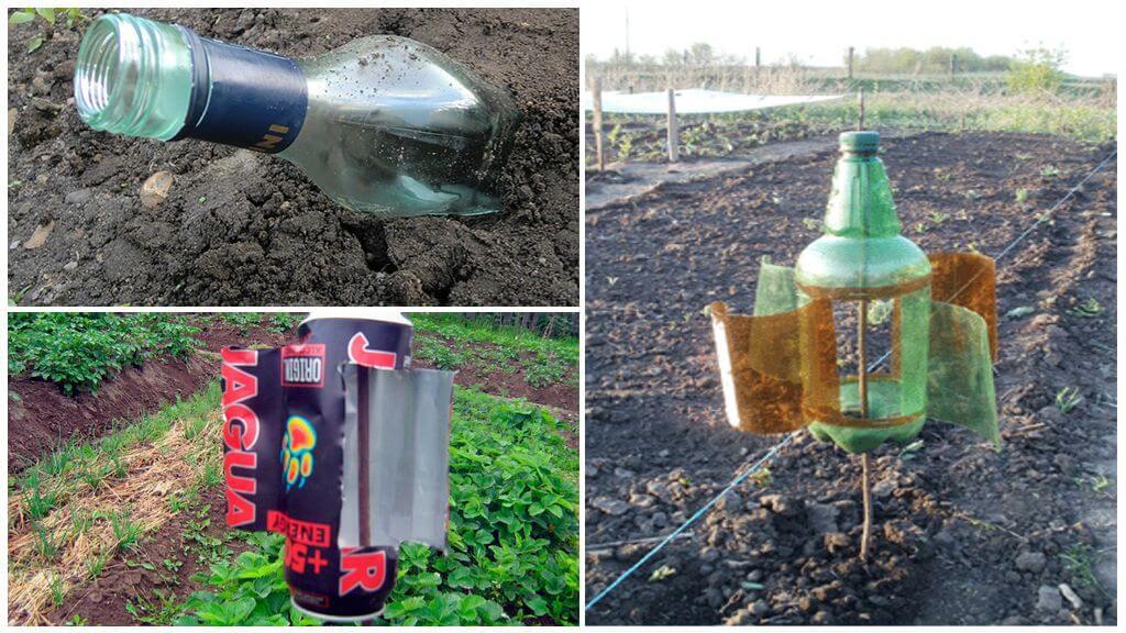 Как вывести крота с дачного участка или огорода