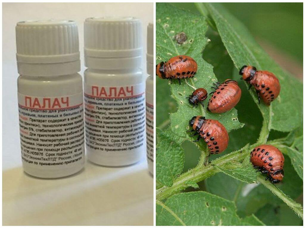Средство Палач от колорадского жука