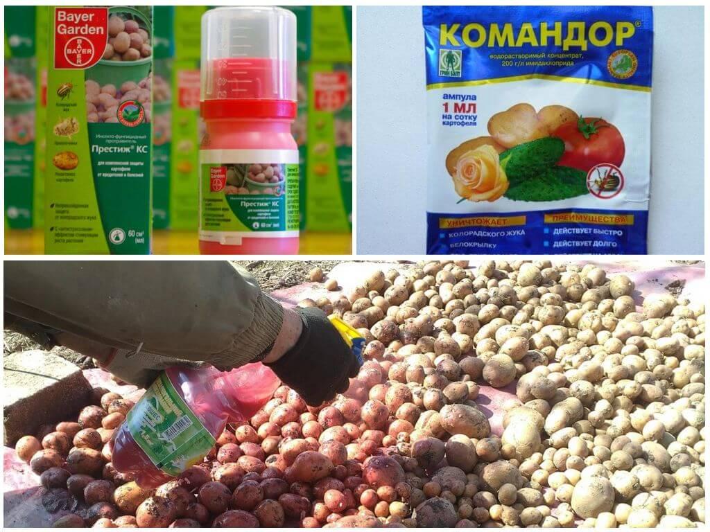 Препараты для обработки семян картофеля от колорадского жука