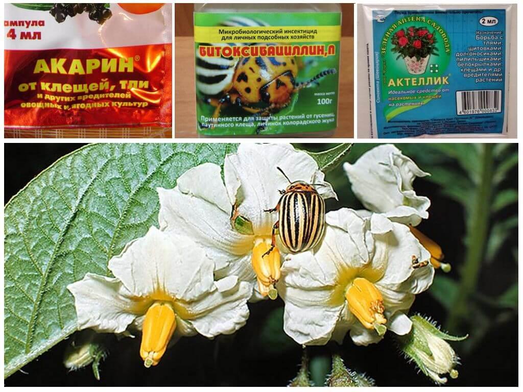 Препараты для борьбы с колорадским жуком