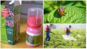 Использование препарата Престиж от колорадского жука