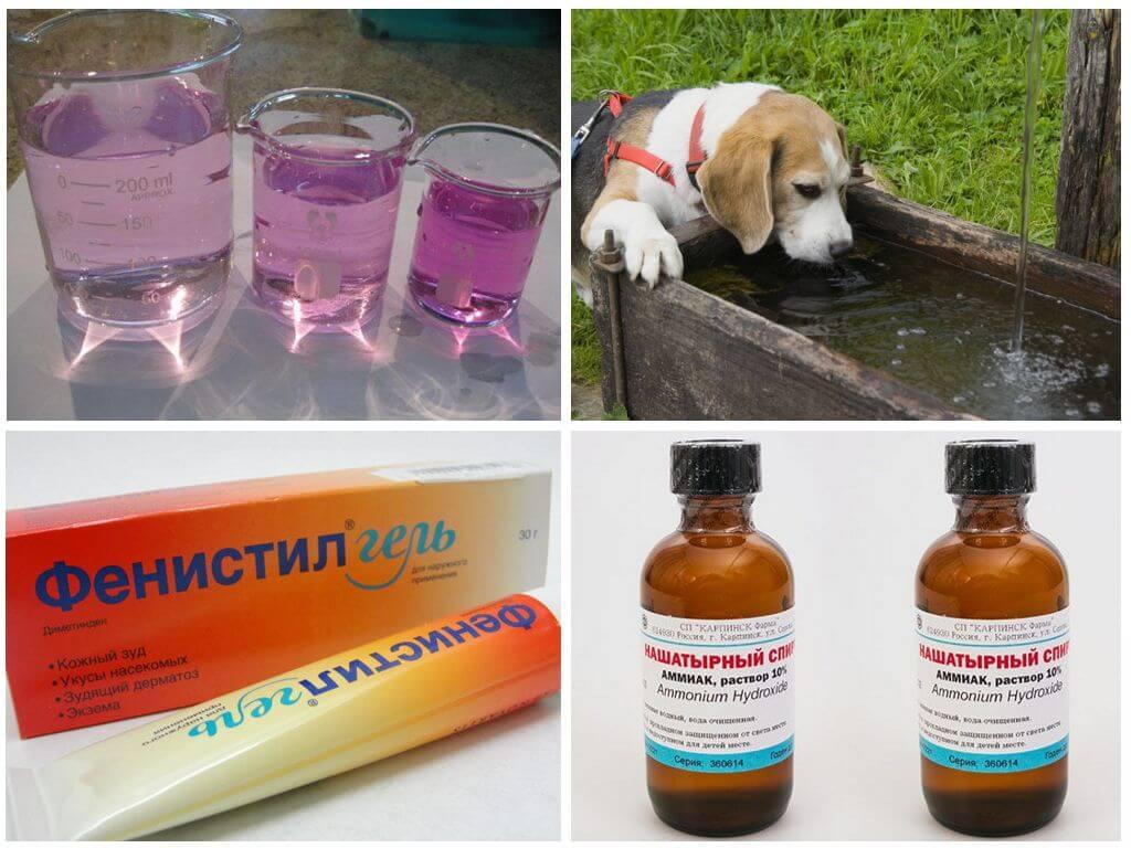 Лечение последствий укуса у собаки