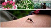 Народные средства борьбы с комарами